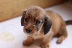 hundenavn etter utseende